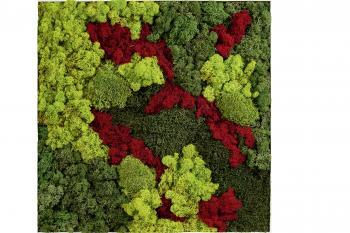 Cadre plantes stabilisées Genesco 4