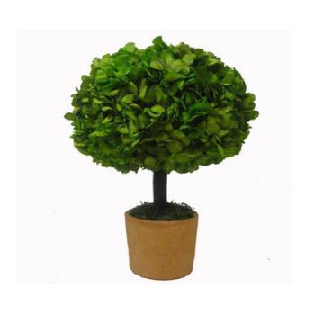 Hortensia vert stabilisé