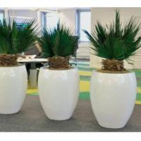 Arbres plantes stabilisés