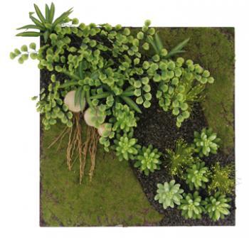 Genexco cadre plantes stabilisés